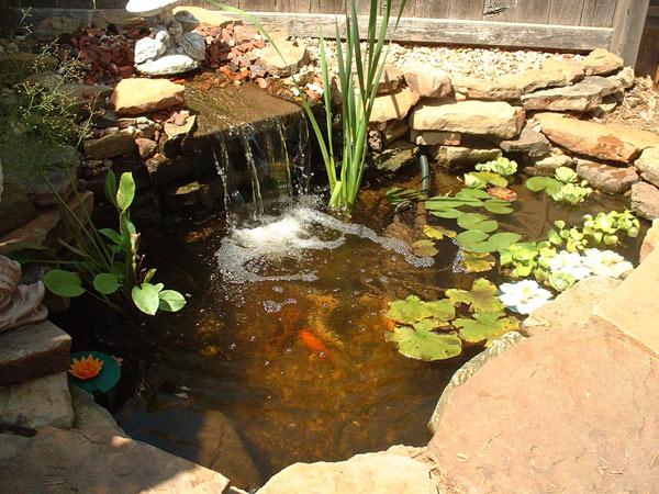 350 gallon pond I made.