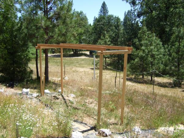 Uphill view of my now level and somewhat square hops trellis. =) It