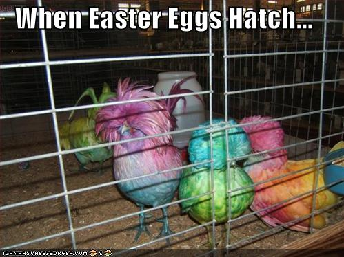 funny pictures easter egg birds