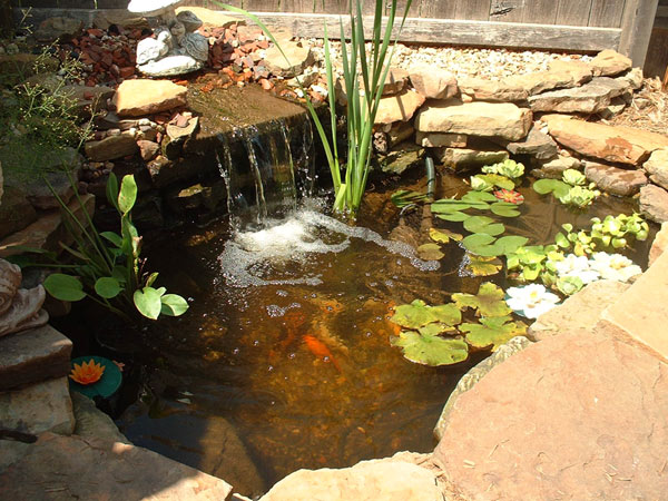 350 gallon pond I made.