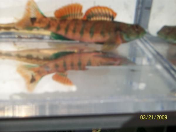 fishtrip1 005
