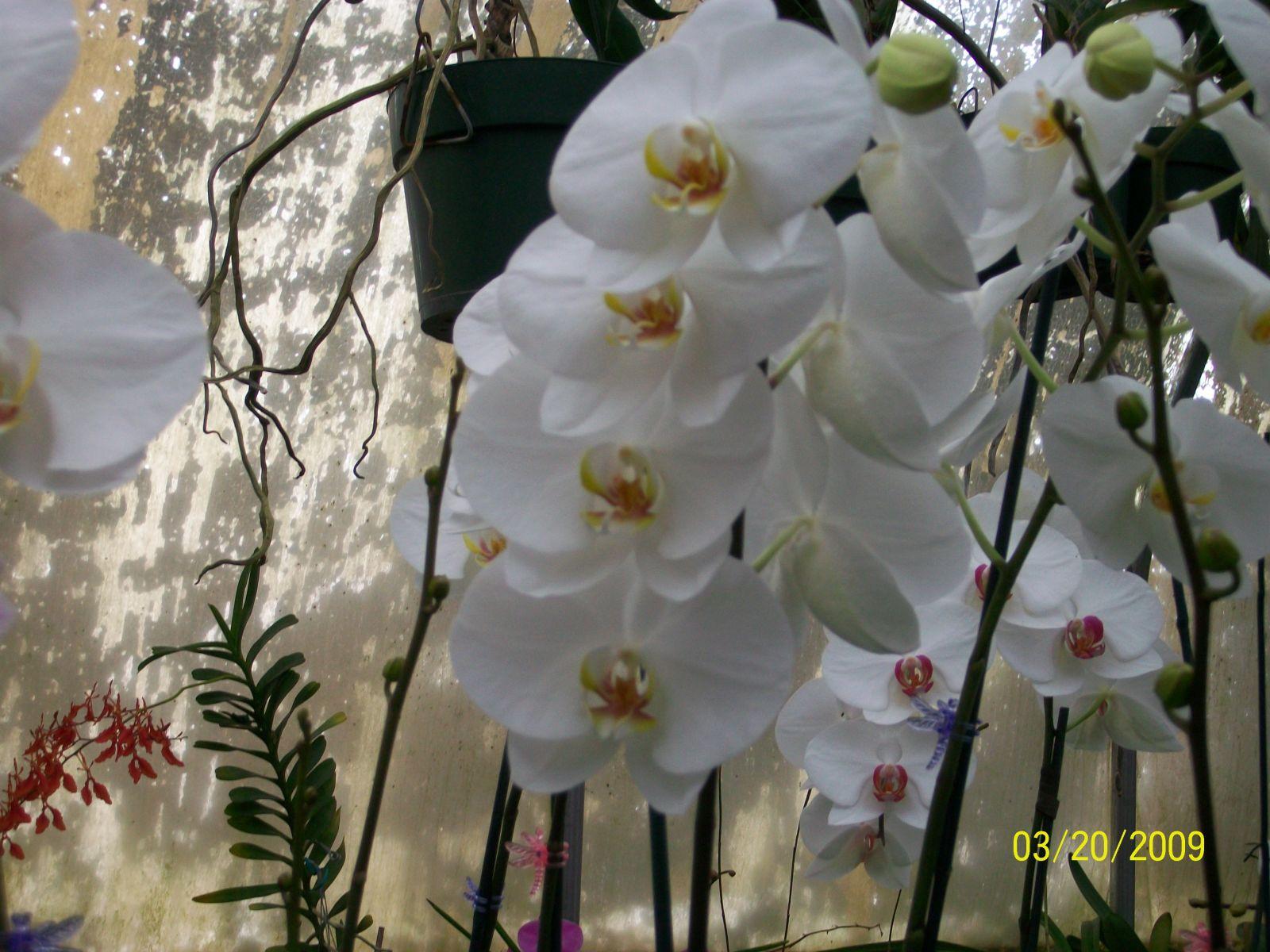 Orchids1 017