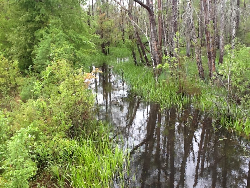 swamp19