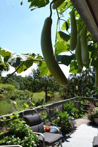 Biochar Gourds of Damocles