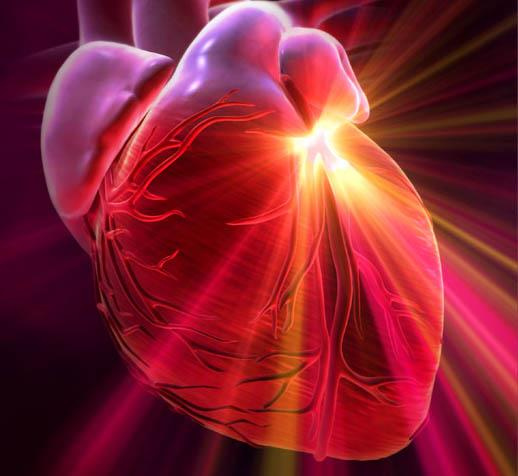 The heart Has Its Own brain consciousness
